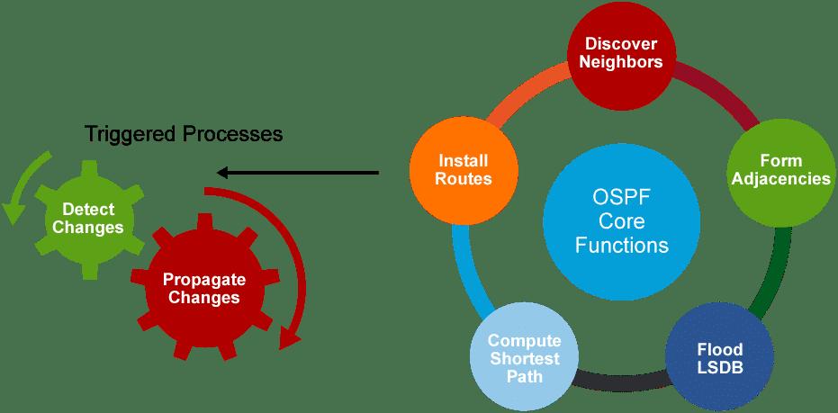 Fonction OSPF